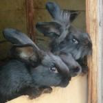 unsere neugierigen Kaninchen